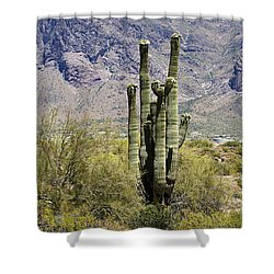 Shower Curtain featuring the photograph Desert Strength by Phyllis Denton
