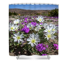 Shower Curtain featuring the photograph Desert Super Bloom 2017 by Peter Tellone