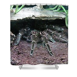 Desert Tarantula Shower Curtain