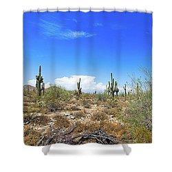 Desert View Shower Curtain