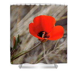 Shower Curtain featuring the photograph Desert Wildflower by Frank Stallone
