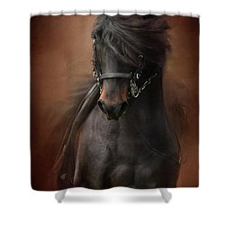 Desparate' IIi Shower Curtain by Kathy Russell
