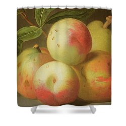 Detail Of Apples On A Shelf Shower Curtain by Jakob Bogdany