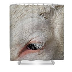 Shower Curtain featuring the photograph Detail Of The Head Of A Cow by Nick Biemans