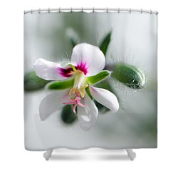 Details Shower Curtain