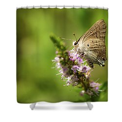 Deudorix Livia Shower Curtain