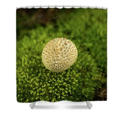 Developing Mushroom On A Bed Of Moss Shower Curtain