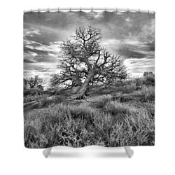 Devils Canyon Tree Shower Curtain