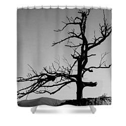 Devoid Of Life Tree Shower Curtain