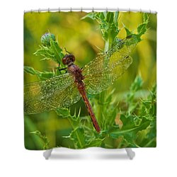 Dew Covered 5904 Shower Curtain by Michael Peychich