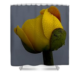 Dew Covered Yellow Water Lily Shower Curtain