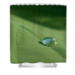Dew Drop Shower Curtain