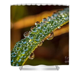 Dew Drop Reflection Shower Curtain
