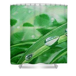 Dew Drops Shower Curtain by Irina Sztukowski
