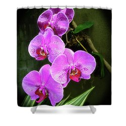 Dew-kissed Moth Orchids Shower Curtain