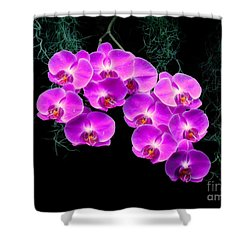 Dew-kissed Orchids Shower Curtain
