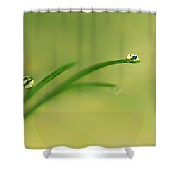 Dew On Dill Shower Curtain