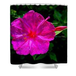 Dew On Four O'clock Blossom Shower Curtain