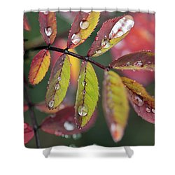 Dew On Wild Rose Leaves In Fall Shower Curtain by Darwin Wiggett
