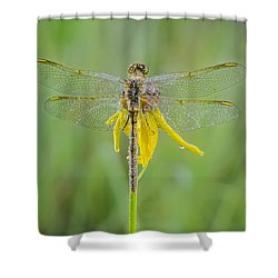 Dewy Dragon Shower Curtain