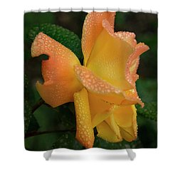 Shower Curtain featuring the photograph Dewy Rose by Jean Noren