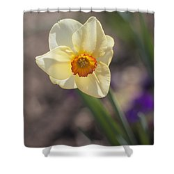 Diagonal Daffy Shower Curtain by Morris  McClung