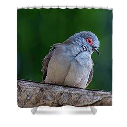 Diamond Dove Shower Curtain
