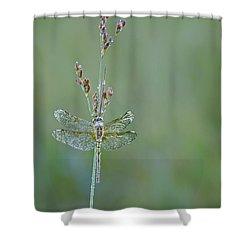 Diamond Dragonfly Shower Curtain