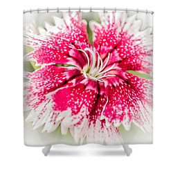 Dianthus Beauty Shower Curtain by Yeates Photography