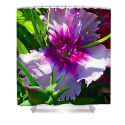 Dianthus Carnation Shower Curtain