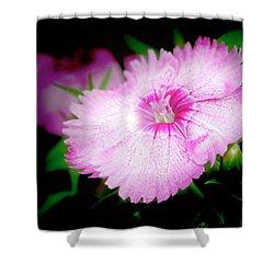 Dianthus Flower Shower Curtain