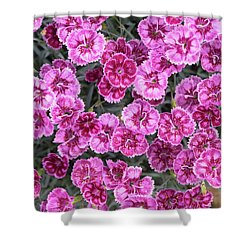 Shower Curtain featuring the photograph Dianthus Gold Fleck by Tim Gainey