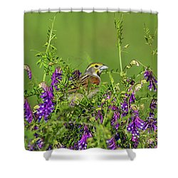 Dickcissel - 8256 Shower Curtain