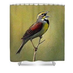Dickcissel Summer Song Shower Curtain by Bruce Morrison