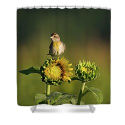 Dickcissel Sunflower Shower Curtain