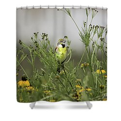 Shower Curtain featuring the photograph Dickcissel With Mexican Hat by Robert Frederick