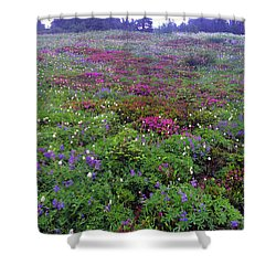 Dickerman Floral Meadow Shower Curtain