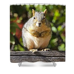 Did You Take My Nuts Shower Curtain by James Steele