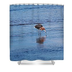 Shower Curtain featuring the photograph Ding Darling's Number One II by Michiale Schneider