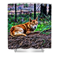 Dingo From Ozz Shower Curtain