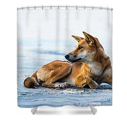 Dingo On Fraser Island Beach Shower Curtain