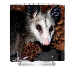 Dining Possums Vi Shower Curtain