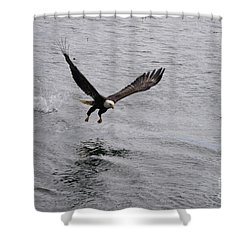 Dinner? Prince Rupert Eagle  Shower Curtain