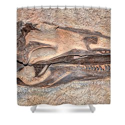 Dinosaur Skull And Teeth In Rock - Utah Shower Curtain by Gary Whitton