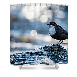 Dipper On Ice Shower Curtain by Torbjorn Swenelius