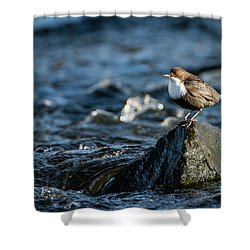 Dipper On The Rock Shower Curtain by Torbjorn Swenelius