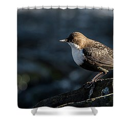 Shower Curtain featuring the photograph Dipper by Torbjorn Swenelius