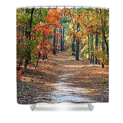 Autumn Scene Dirt Road Shower Curtain