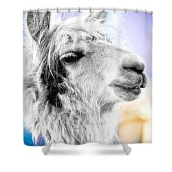 Shower Curtain featuring the photograph Dirtbag Llama by TC Morgan