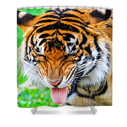 Disgusted Tiger Shower Curtain